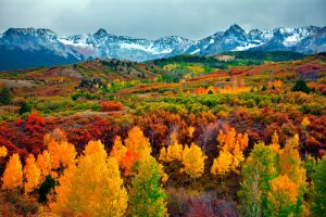 Autumn trees with snow capped mountains in the background