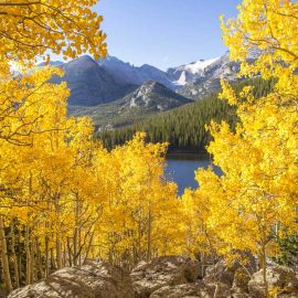 Fall leaves near Colorado lake